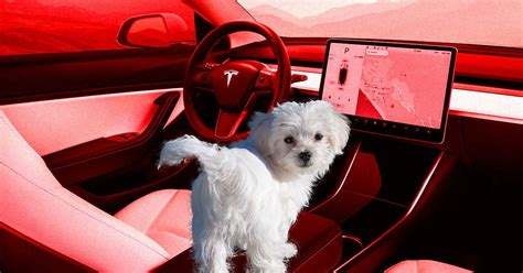 """Tesla's New """"Dog Mode"""" Will Keep Canines Happy With AC, Music"""
