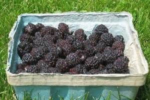 Raspberry supplement may help you lose weight - Indian Express