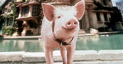 7 things you need to know before National Pig Day March 1