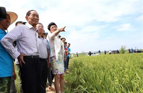 Yuan Longping's saltwater rice to become UAE national gift