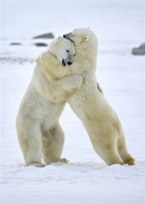 Top 7 Photos of Animals in Love: A Tribute to Valentines Day