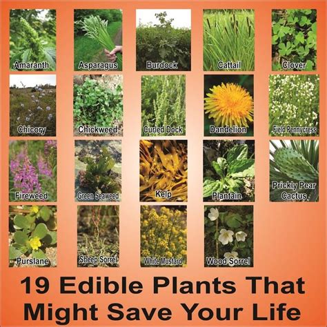 Knowing what wild plants you can eat and other things to
