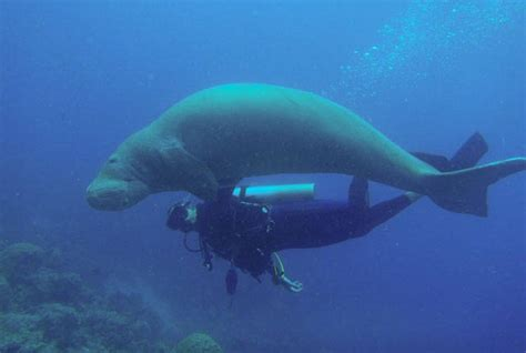 Afternoon Single Dive ⋆ Tours and Things to do in Port