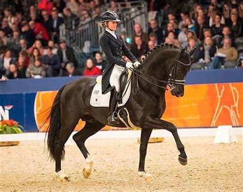 KWPN Approved Stallion Dark Pleasure to Stand at Stal Hoog