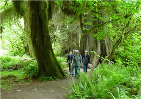 Exploring the Forests - Olympic National Park (U