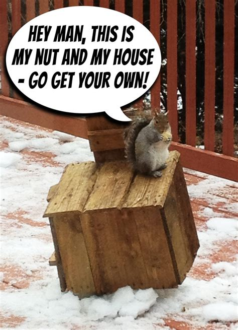 Things to do with old pallets: The Rustic Squirrel Hotel